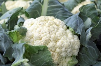 cauliflower-1465732__340