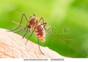 mpsquito1