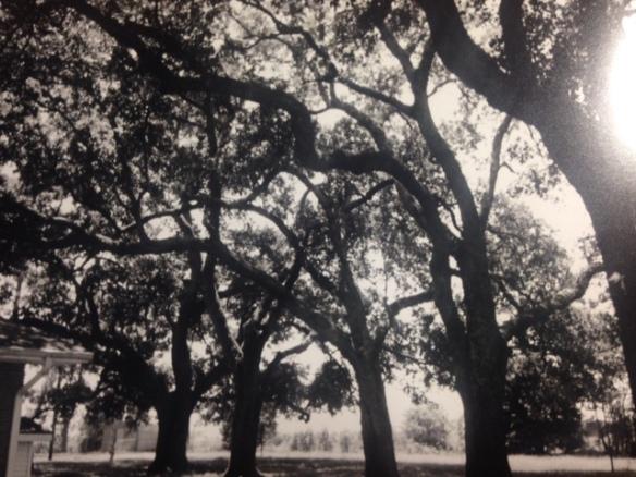 trees in Eunice