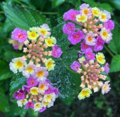gratitude flowers